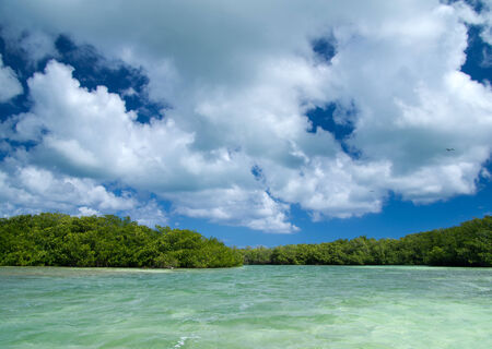 mangrove trees in caribbean sea photo