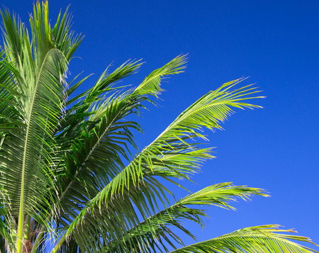 thicket: Palm tree on the sky