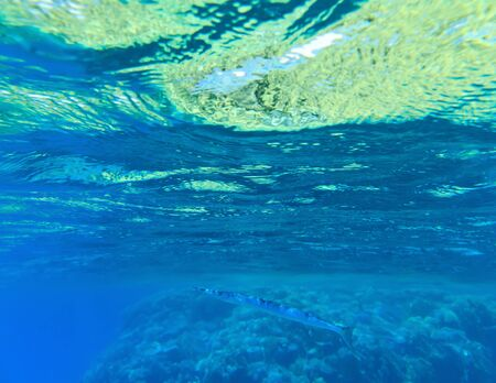 beneath the surface: underwater scene with copy space Stock Photo
