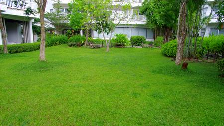 stone path: Garden stone path with grass