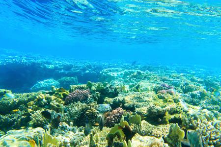 corales marinos: Panorama bajo el agua con peces y corales