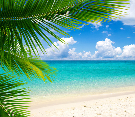 beautiful beach and tropical sea Banque d'images