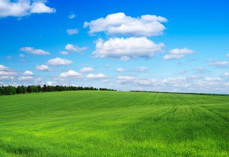 champ vert et bleu ciel