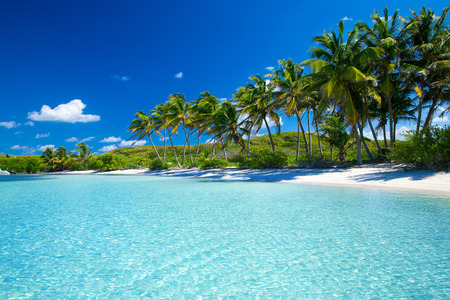 paradise: Palm and tropical beach
