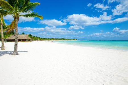 praia: Palma e praia tropical