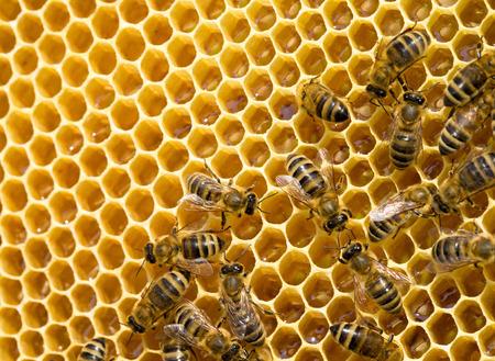 bijen zwermen op een honingraat Stockfoto
