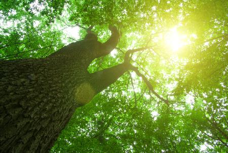 groene bos achtergrond in een zonnige dag Stockfoto