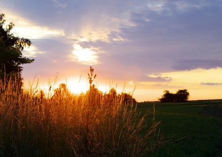 meadow  grass: pradera de c�sped en una puesta de sol