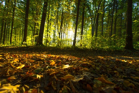 wood backgrounds: forest trees. nature green wood backgrounds