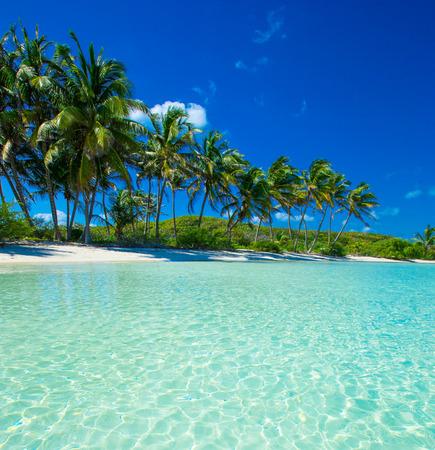 パームと熱帯のビーチ