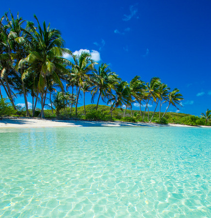 Palmbomen en tropische strand