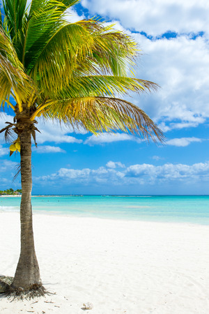 Palm and tropical beach Stock Photo - 39233509