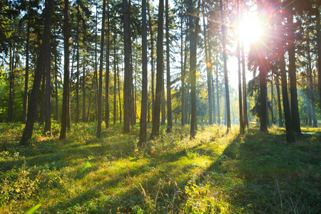 forest trees. nature green wood backgrounds Stock Photo - 39233530