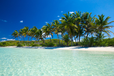 Palm and tropical beach Stock Photo - 39605541