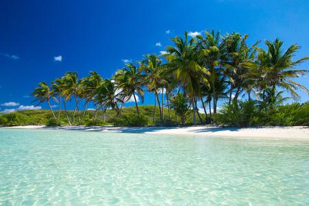 tropicale: Palm et plage tropicale