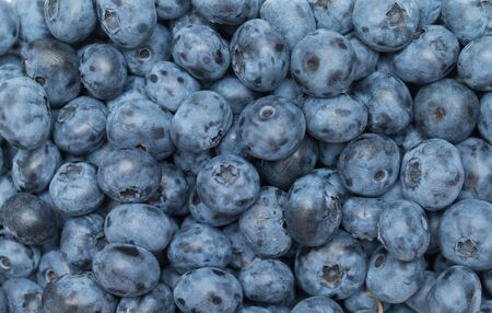 freshly picked: Freshly picked blueberries Stock Photo