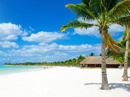tropical beach: Palm and tropical beach