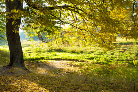 nature green: �rboles forestales. naturaleza verde fondos de madera Foto de archivo
