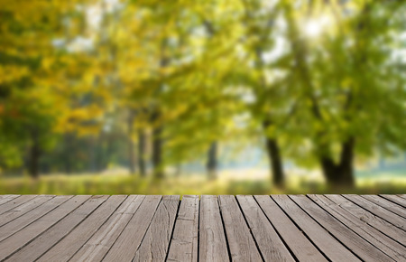 uplifting: forest trees. nature green wood backgrounds