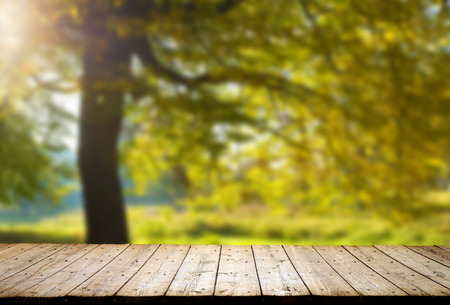 nature: forest trees. nature green wood backgrounds