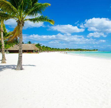 Palma y playa tropical
