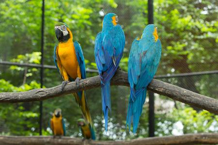 perch: parrot bird sitting on the perch