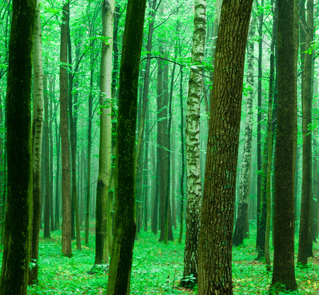 Waldbäumen. Natur grünem Holz Hintergründe Standard-Bild - 41017088