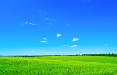 horizons: green field and blue sky