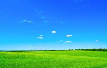 ciel avec nuages: vert et bleu ciel