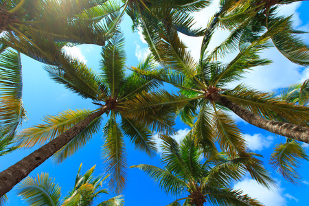 in palm: Palm tree on the sky