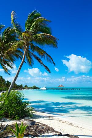 Palm en tropisch strand