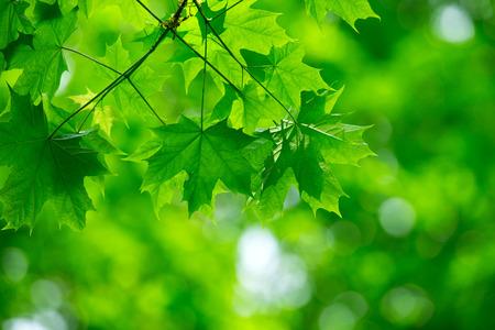 groene bladeren achtergrond in zonnige dag Stockfoto