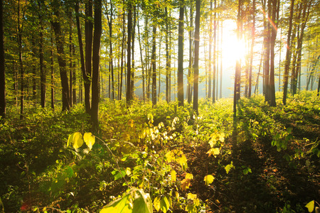 sunny: forest trees. nature green wood backgrounds