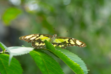 nymphalidae: Butterfly perched on a flower