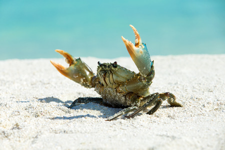 the crab: cangrejo en la playa, isla Tachai Foto de archivo