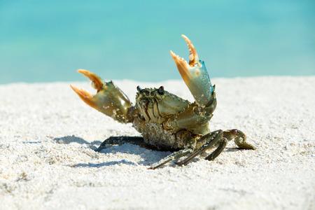 granchio sulla spiaggia, isola Tachai