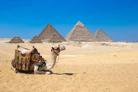 A colorfully saddled camel waits for its owner in front of the pyramids with a beautiful sky of Giza in Cairo, Egypt 스톡 콘텐츠