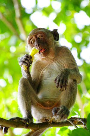 biped: Monkey sitting on the tree