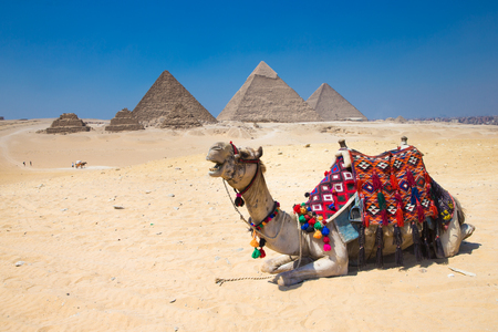 saddle camel: A colorfully saddled camel waits for its owner in front of the pyramids with a beautiful sky of Giza in Cairo, Egypt Stock Photo