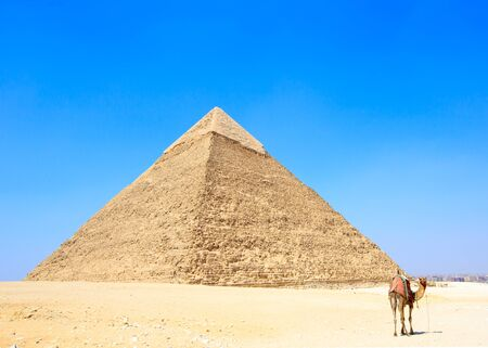 saddle camel: pyramid with a beautiful sky of Giza in Cairo, Egypt. Stock Photo
