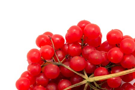 guelder rose berry: red berries of viburnum isolated on white