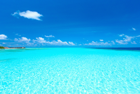 blue lagoon: beach in Maldives with few palm trees and blue lagoon