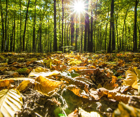 magnificence: autumn forest trees. nature green wood backgrounds Stock Photo