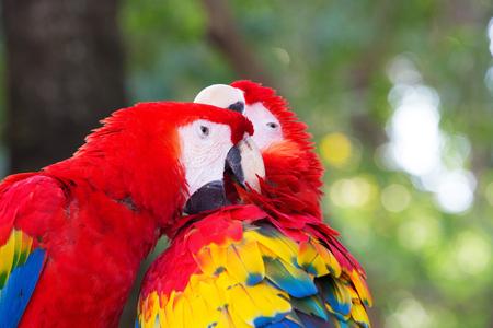loro: pájaro del loro sentado en la percha