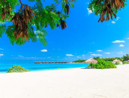 SEA  LANDSCAPE: tropical beach in Maldives with few palm trees and blue lagoon Stock Photo