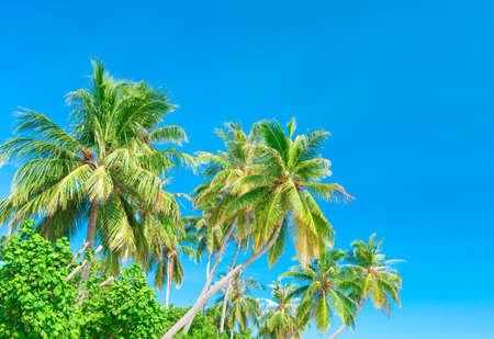 wilds: Palm tree on the sky