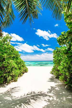 island paradise: tropical beach in Maldives with few palm trees and blue lagoon Stock Photo