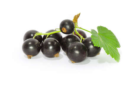 blackcurrant: Black currant on the white background Stock Photo