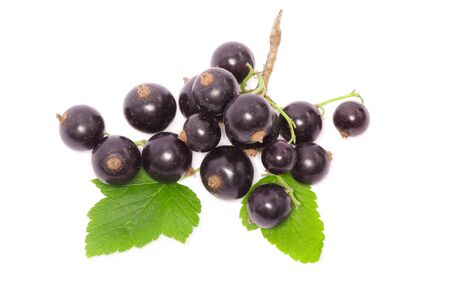 currant: Black currant on the white background Stock Photo