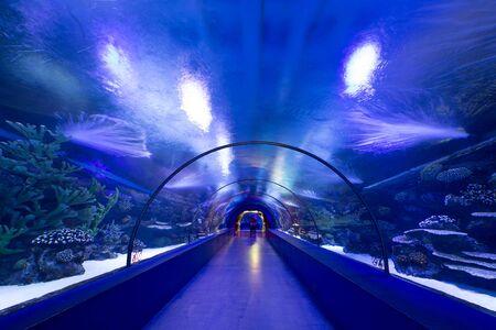 fishtank: Underwater tunnel